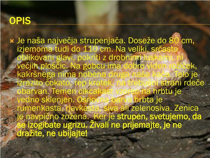 Je naša največja strupenjača. Doseže do 80 cm, izjemoma tudi do 110 cm. Na veliki, srčasto oblikovani glavi, pokriti z drobnimi luskami, ni večjih ploščic. Na gobcu ima dobro viden rožiček, kakršnega nima nobena druga naša kača. Telo je izrazito čokato, rep kratek, na trebušni strani rdeče obarvan. Temen cikcakast vzorec na hrbtu je vedno sklenjen. Osnovna barva hrbta je rumenkasta, rjavkasta, siva ali