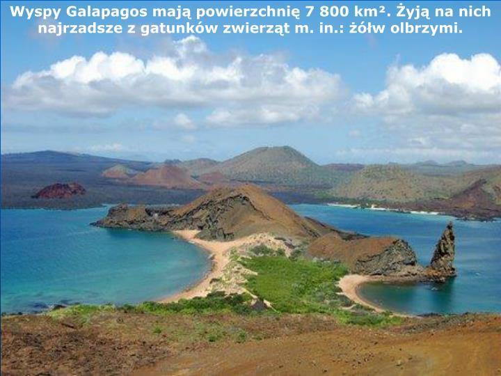 Wyspy Galapagos mają powierzchnię 7 800 km². Żyją na nich najrzadsze z gatunków zwierząt m. in.: żółw olbrzymi.