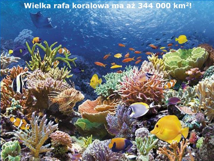 Wielka rafa koralowa ma aż 344 000 km