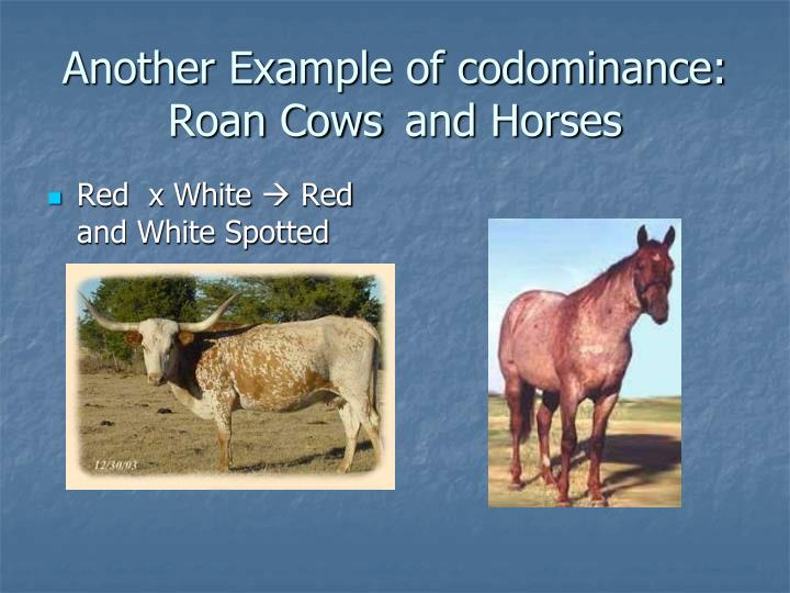 Another Example of codominance: