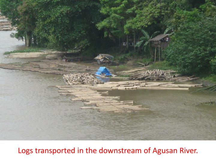 Logs transported in the downstream of