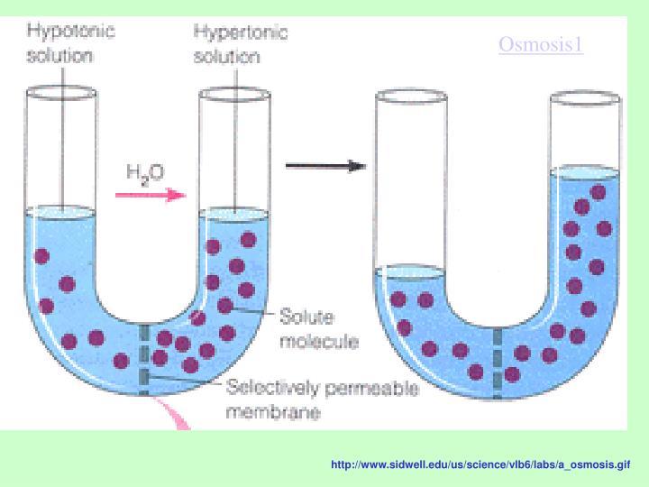 Osmosis1
