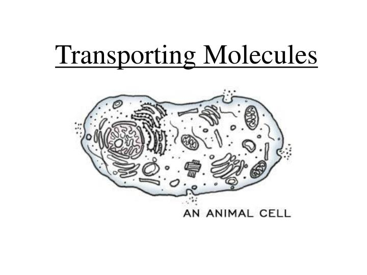Transporting molecules