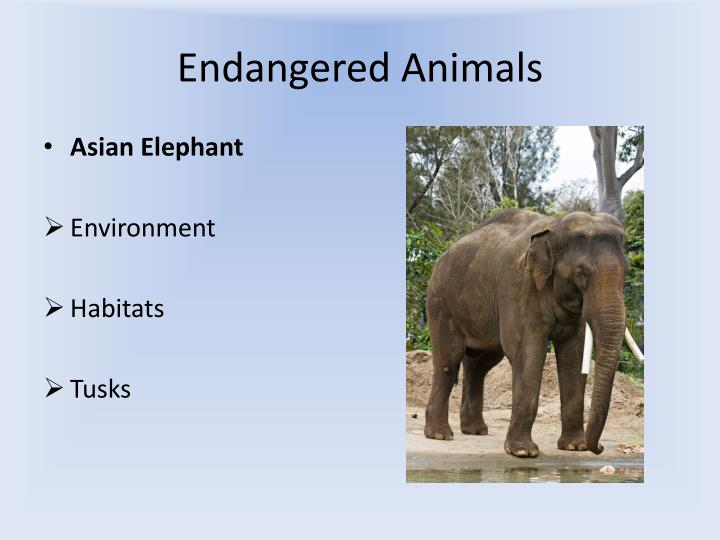 Endangered animals1
