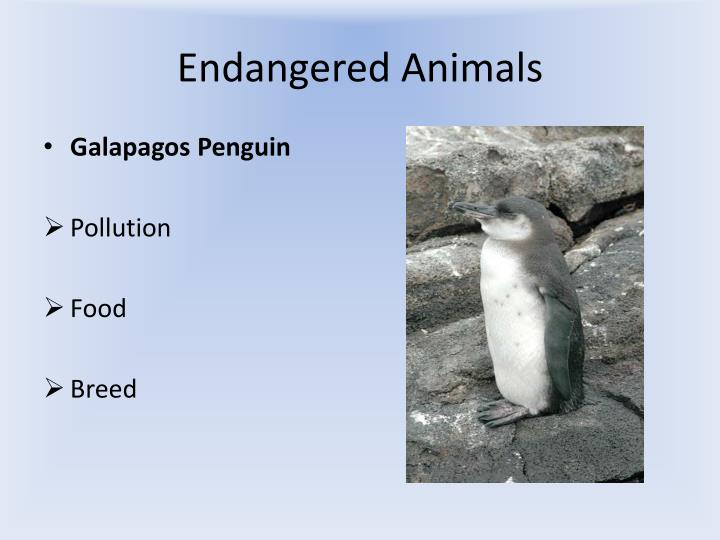 Endangered animals2