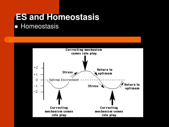 Es and homeostasis
