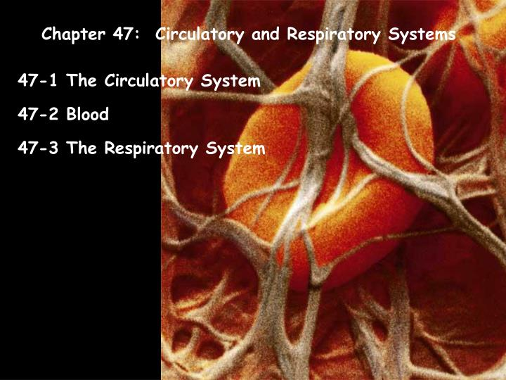 Chapter 47:  Circulatory and Respiratory Systems