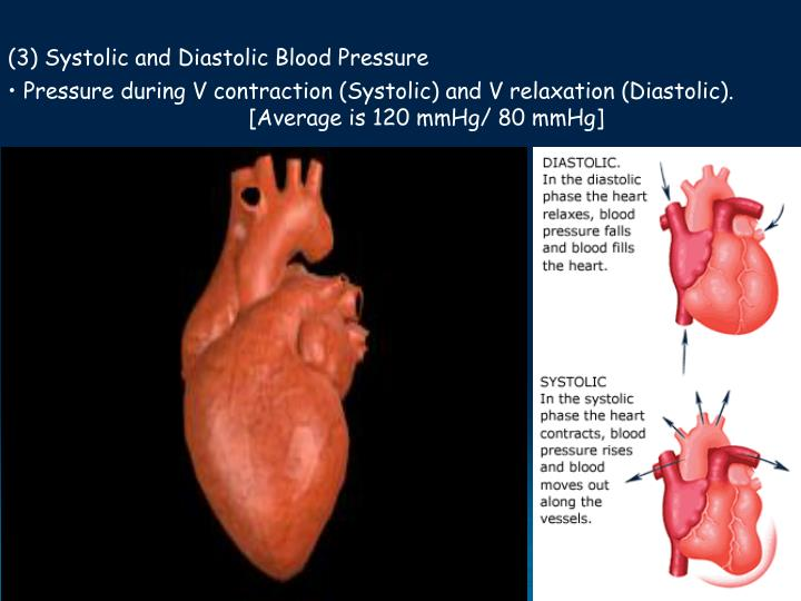 (3) Systolic and Diastolic Blood Pressure