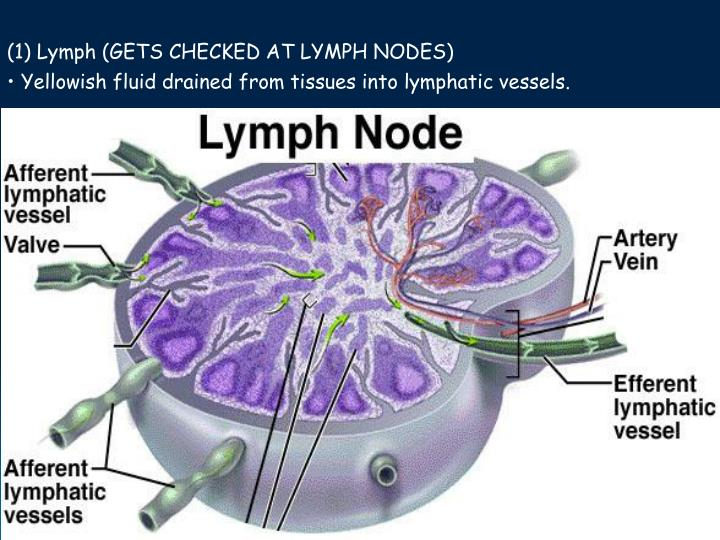 (1) Lymph (GETS CHECKED AT LYMPH NODES)