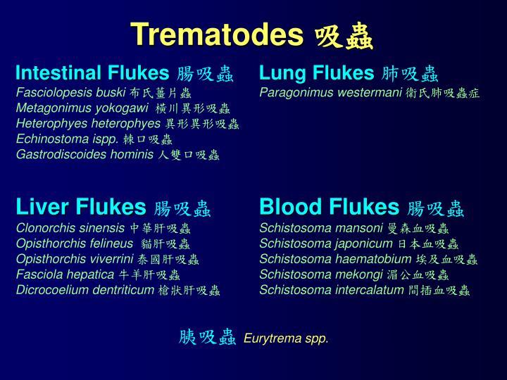 Trematodes