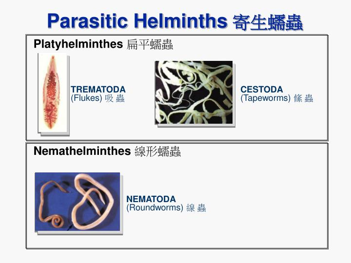 Parasitic Helminths