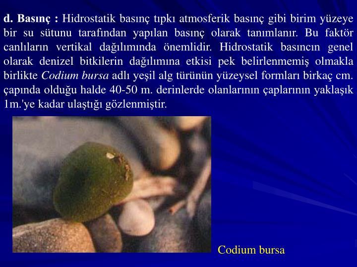 d. Basn :