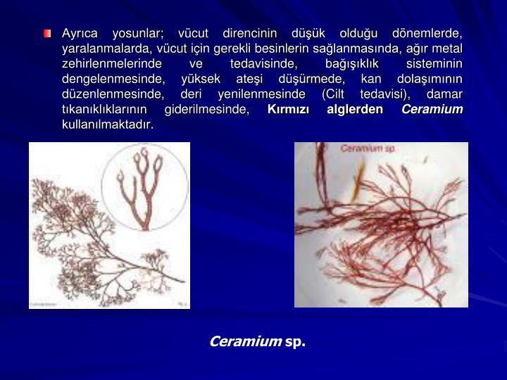 Ayrca yosunlar; vcut direncinin dk olduu dnemlerde, yaralanmalarda, vcut iin gerekli besinlerin salanmasnda, ar metal zehirlenmelerinde ve tedavisinde, baklk sisteminin dengelenmesinde, yksek atei drmede, kan dolamnn dzenlenmesinde, deri yenilenmesinde (Cilt tedavisi), damar tkanklklarnn giderilmesinde,