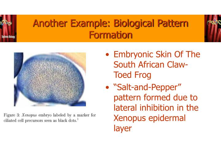 Another Example: Biological Pattern Formation