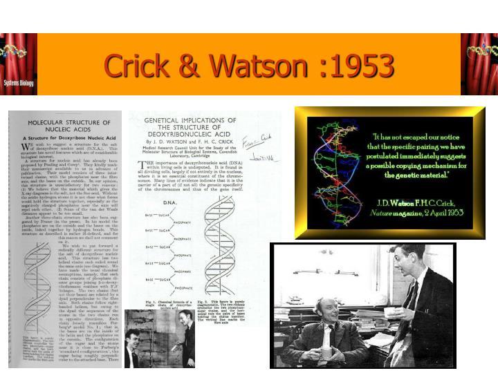 Crick & Watson :1953