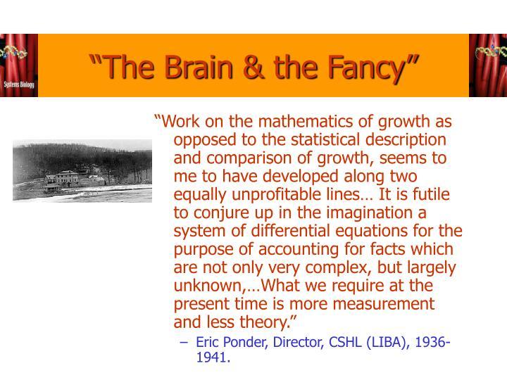 """""""The Brain & the Fancy"""""""