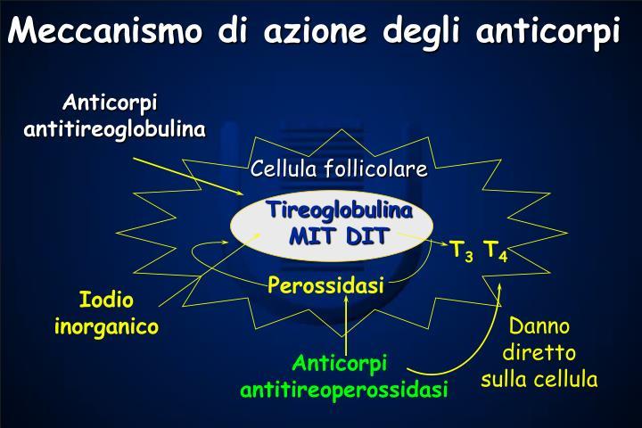 Meccanismo di azione degli anticorpi