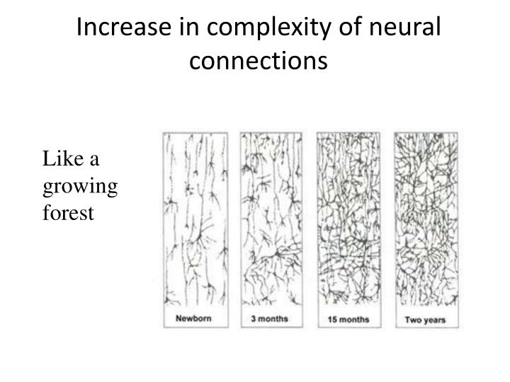 Increase in complexity of neural connections