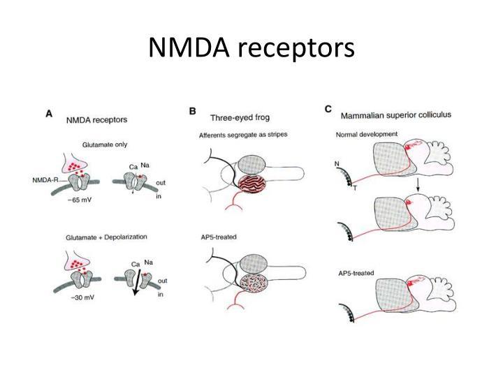 NMDA receptors