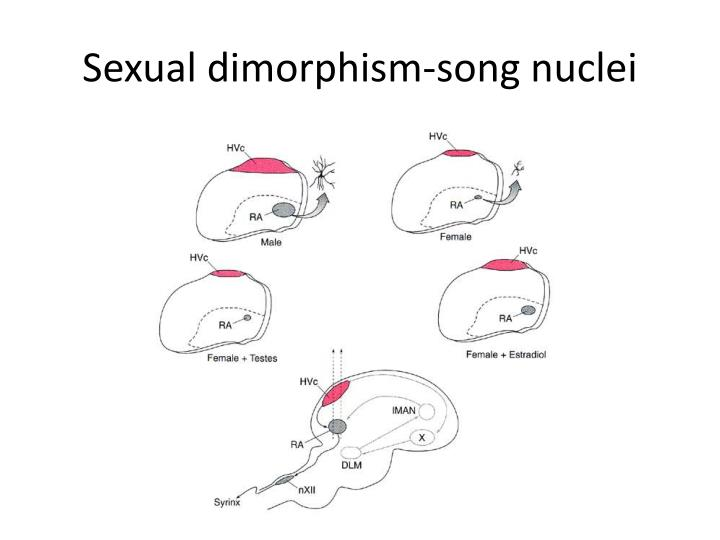 Sexual dimorphism-song nuclei