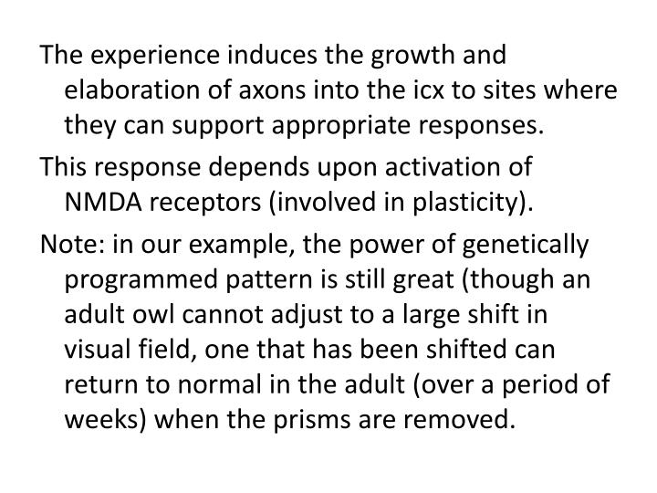The experience induces the growth and elaboration of axons into the icx to sites where they can support appropriate responses.