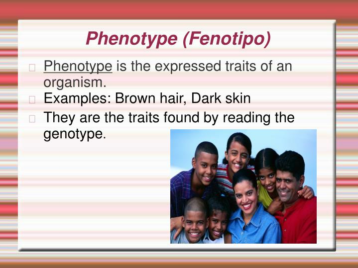 Phenotype (Fenotipo)