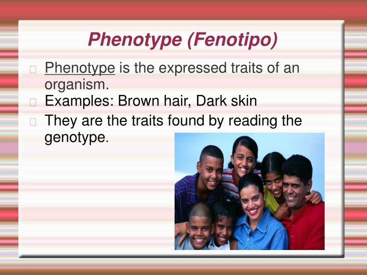 Phenotype (Fenotipo)
