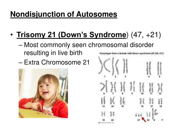 Nondisjunction of Autosomes