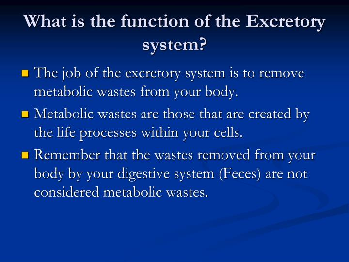 What is the function of the Excretory system?