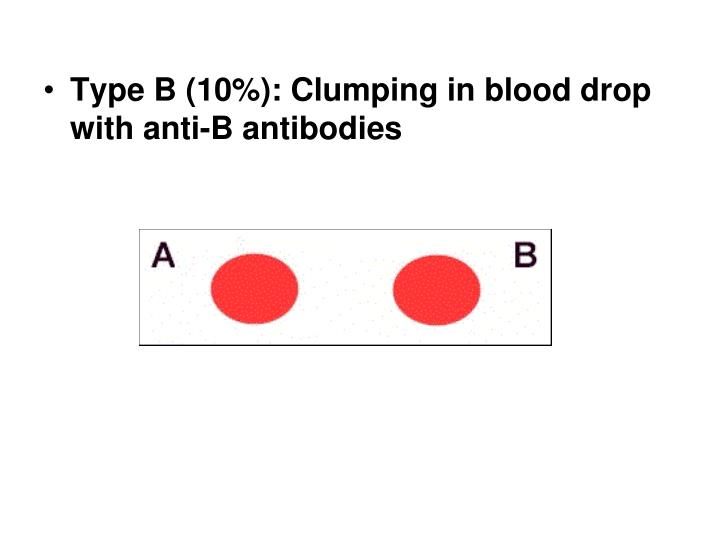 Type B (10%): Clumping in blood drop  with anti-B antibodies