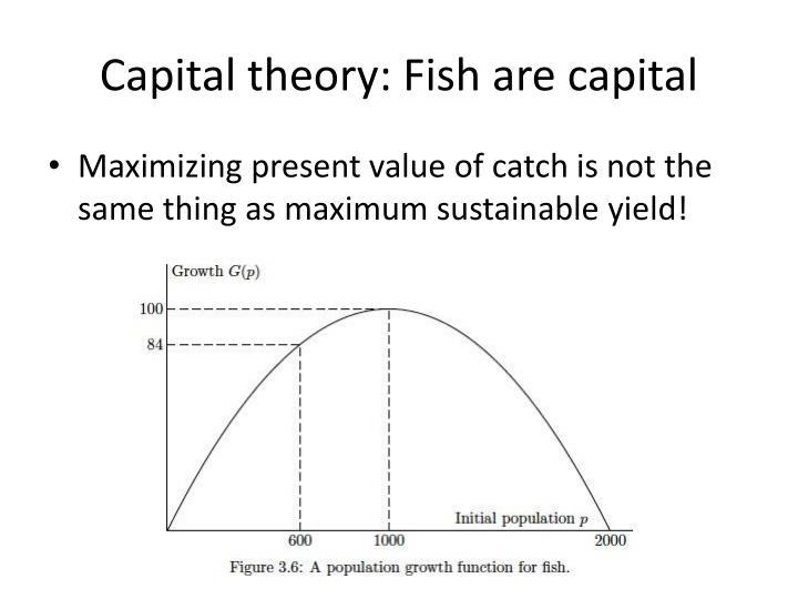 Capital theory: Fish are capital