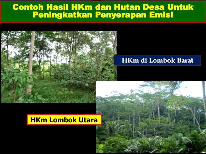 Contoh Hasil HKm dan Hutan Desa Untuk Peningkatkan Penyerapan Emisi