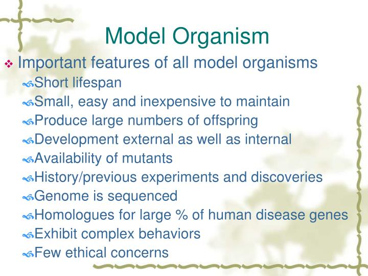 Model Organism
