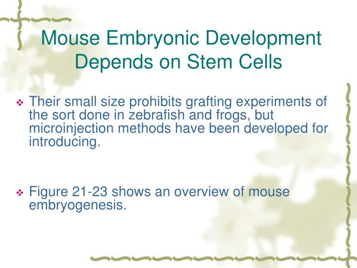 Mouse Embryonic Development Depends on Stem Cells