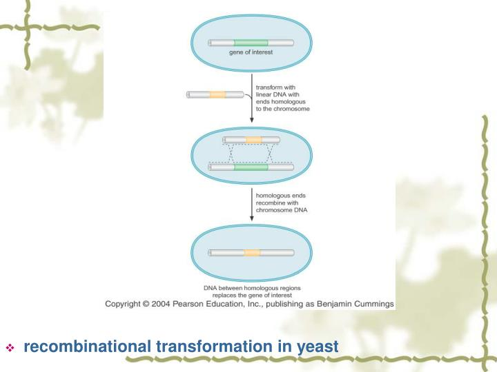 recombinational transformation in yeast