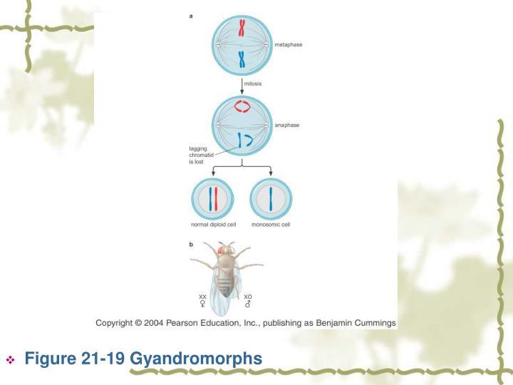 Figure 21-19 Gyandromorphs