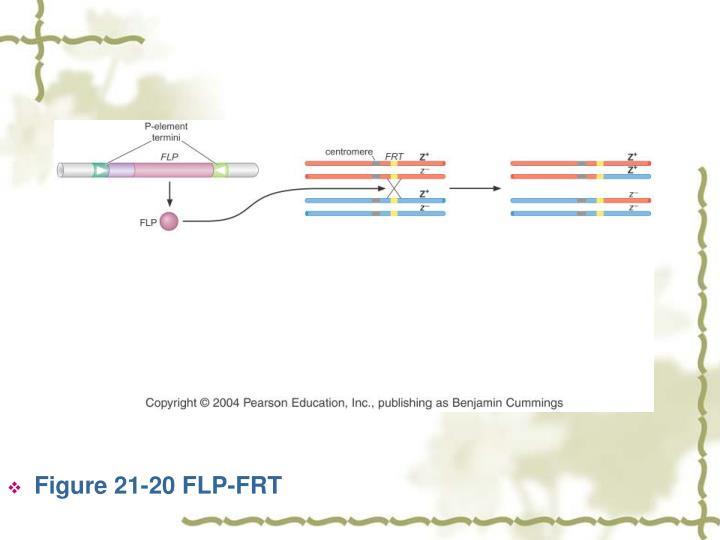Figure 21-20 FLP-FRT
