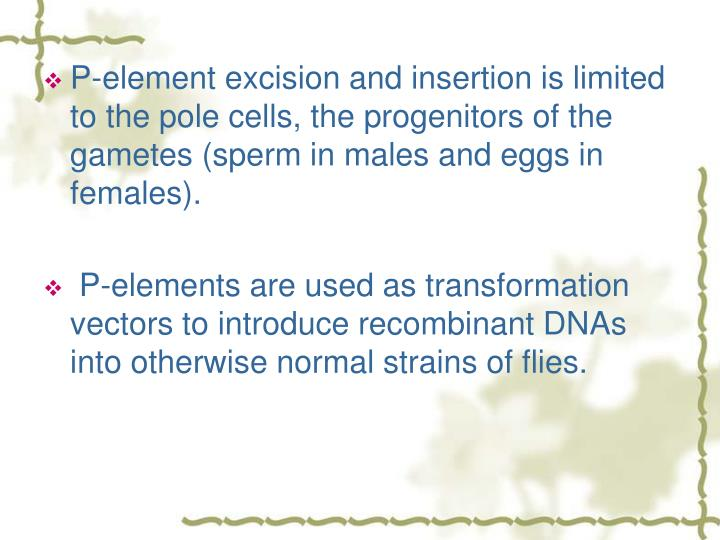 P-element excision and insertion is limited to the pole cells, the progenitors of the gametes (sperm in males and eggs in females).