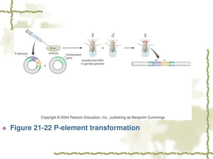 Figure 21-22 P-element transformation