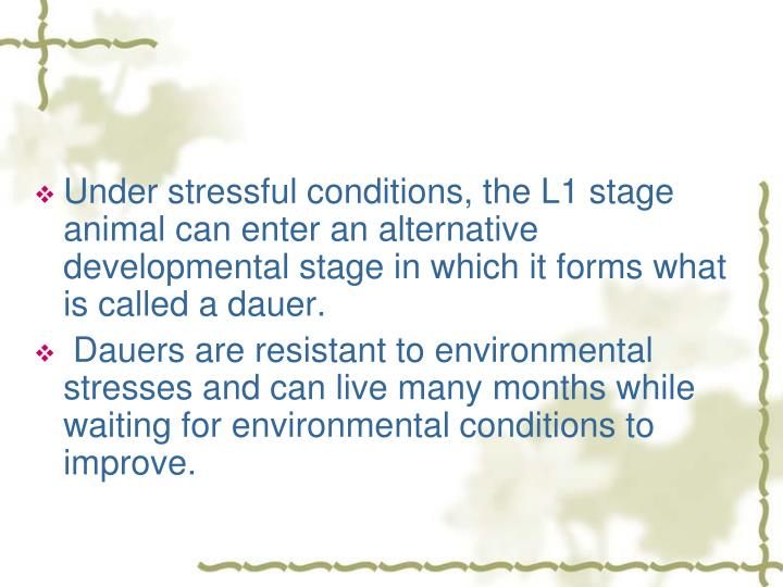 Under stressful conditions, the L1 stage animal can enter an alternative developmental stage in which it forms what is called a dauer.