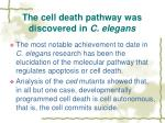 the cell death pathway was discovered in c elegans