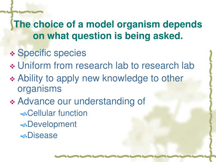 The choice of a model organism depends on what question is being asked.
