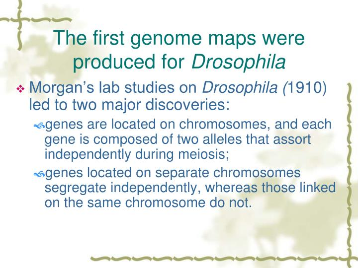 The first genome maps were produced for