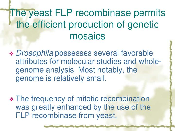 The yeast FLP recombinase permits the efficient production of genetic mosaics