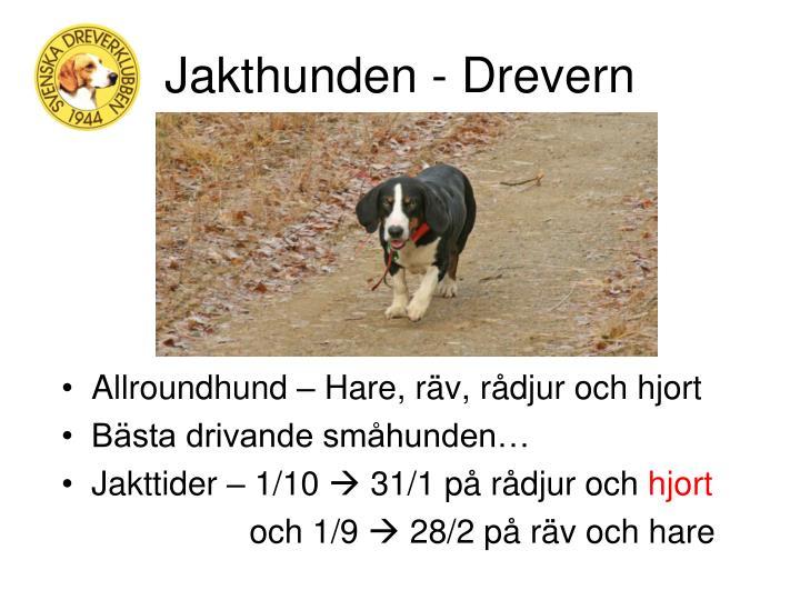 Jakthunden - Drevern