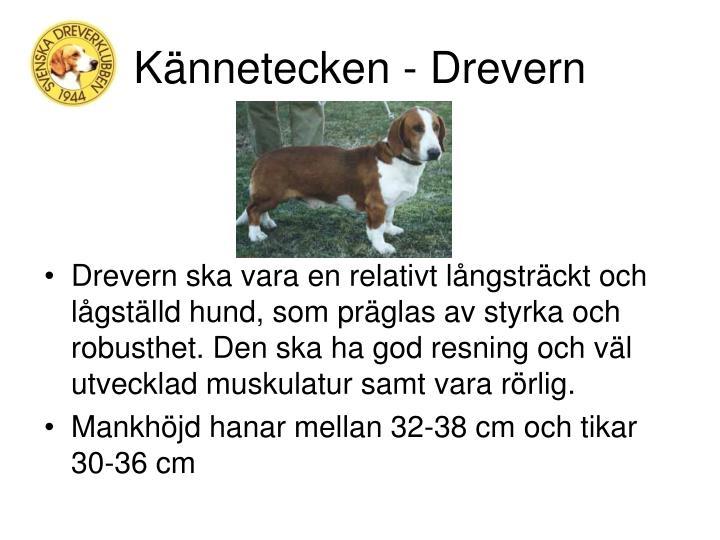 Kännetecken - Drevern