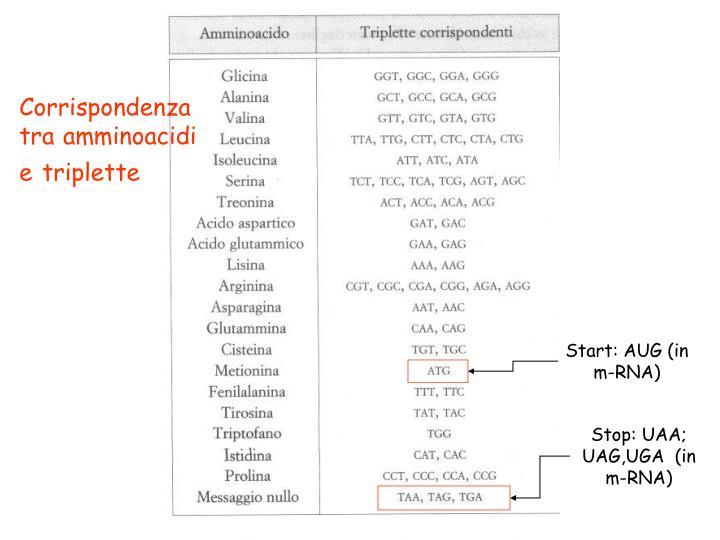 Corrispondenza tra amminoacidi e