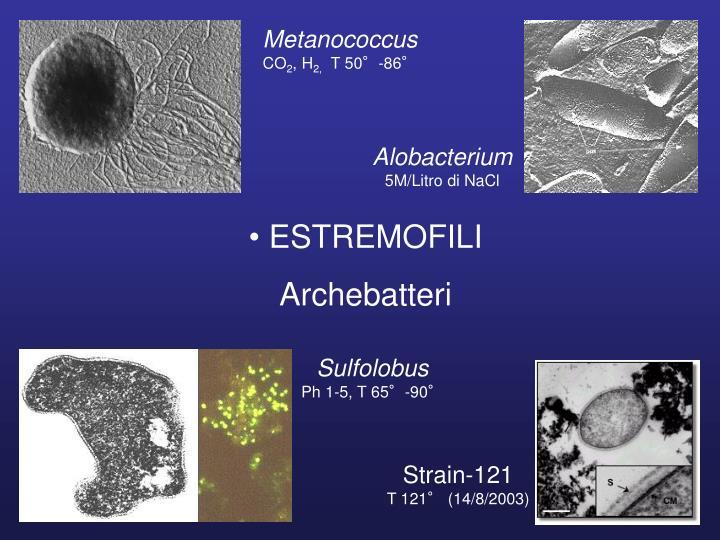 Metanococcus