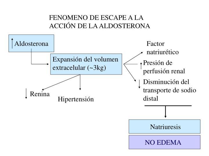 FENOMENO DE ESCAPE A LA ACCIÓN DE LA ALDOSTERONA