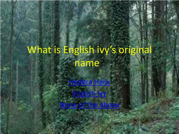 What is english ivy s original name